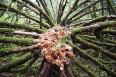 die besagte Waldtentakel